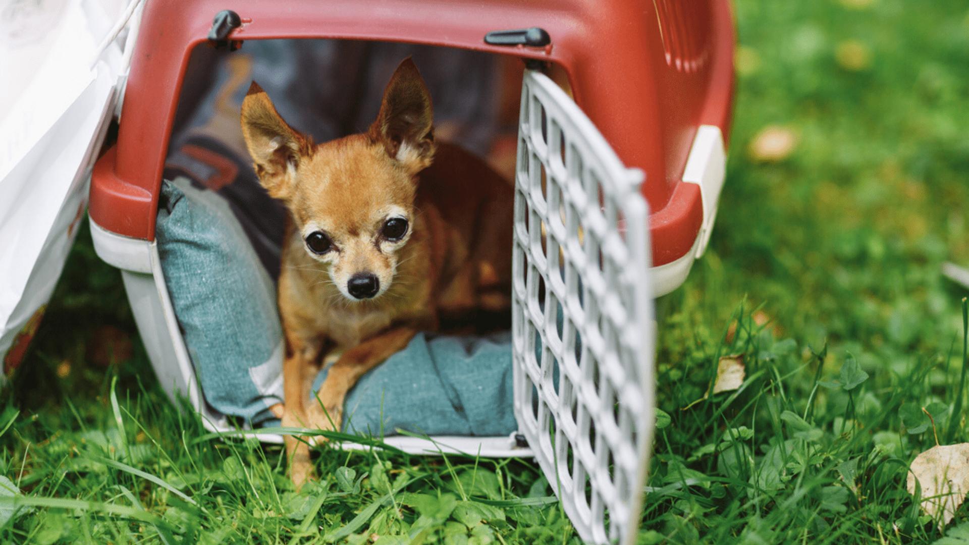 A melhor caixa de transporte para cachorro precisa se adequar ao porte e à idade do animal (Imagem: Reprodução/Shutterstock)