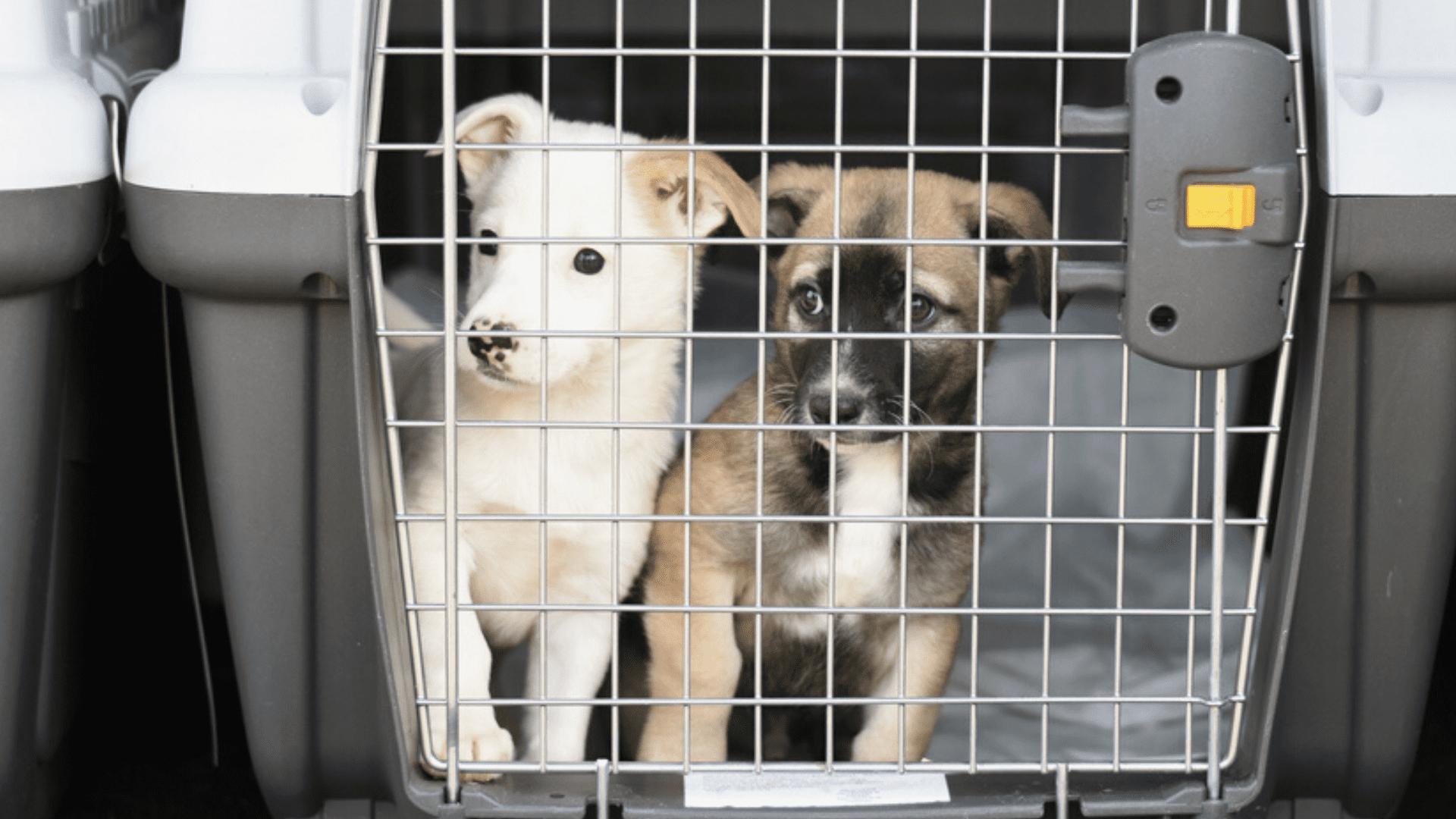 O tamanho ideal da caixa de transporte para cachorro precisa ser confortável para o pet (Imagem: Reprodução/Shutterstock)