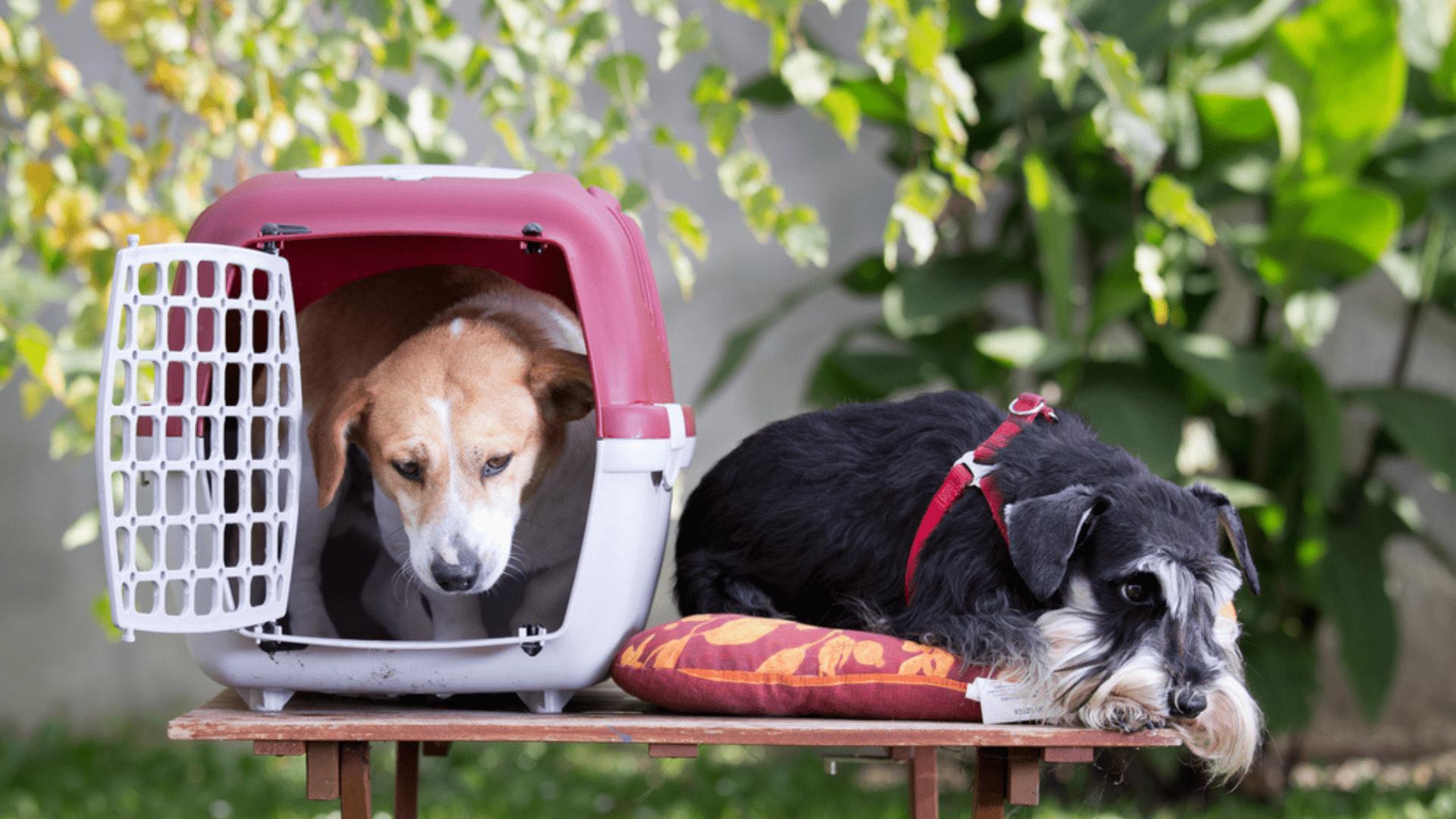 Veja como escolher e qual é a melhor caixa de transporte para o seu cachorro! (Imagem: Reprodução/Shutterstock)