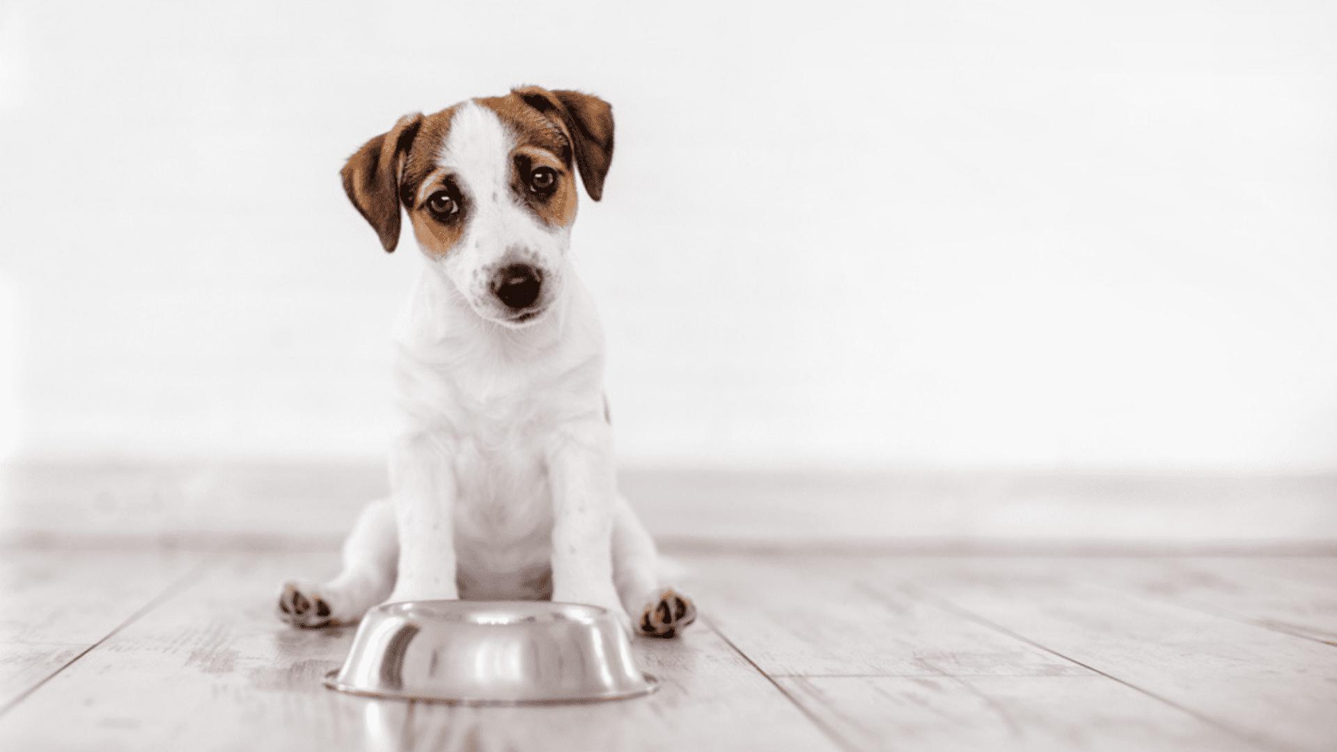 Confira os melhores tipos de comedouro para cachorro! (Imagem: Reprodução/Shutterstock)