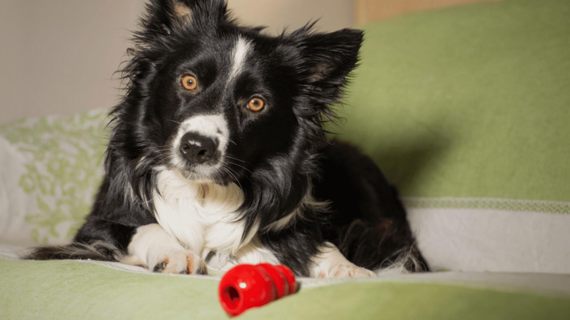 O comedouro para cachorro interativo pode aparecer em formato de tigela ou de brinquedo (Imagem: Reprodução/Shutterstock)