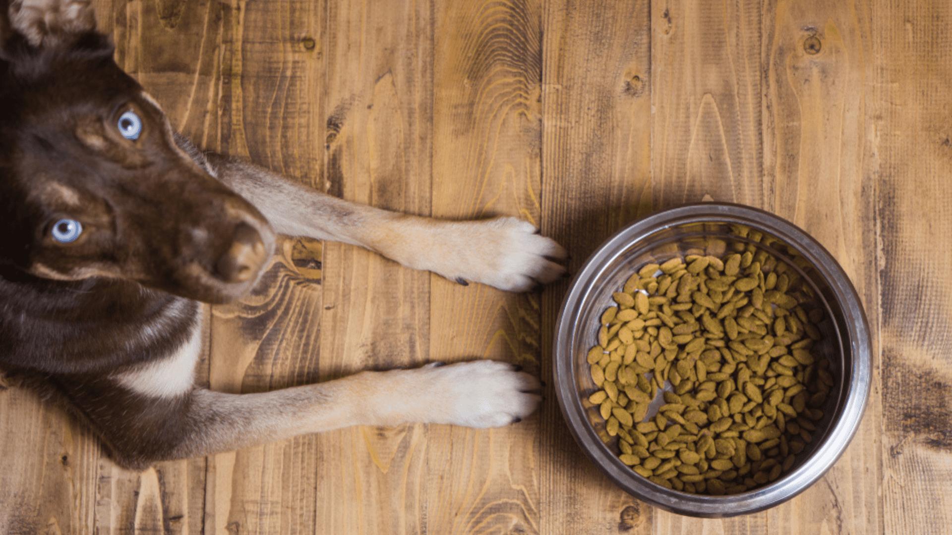 A altura ideal do comedouro para cachorro é próxima ao peito do cão (Imagem: Reprodução/Shutterstock)