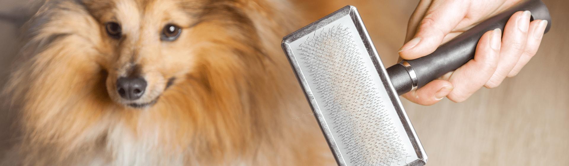 Escova para cachorro: qual é a melhor para cães?