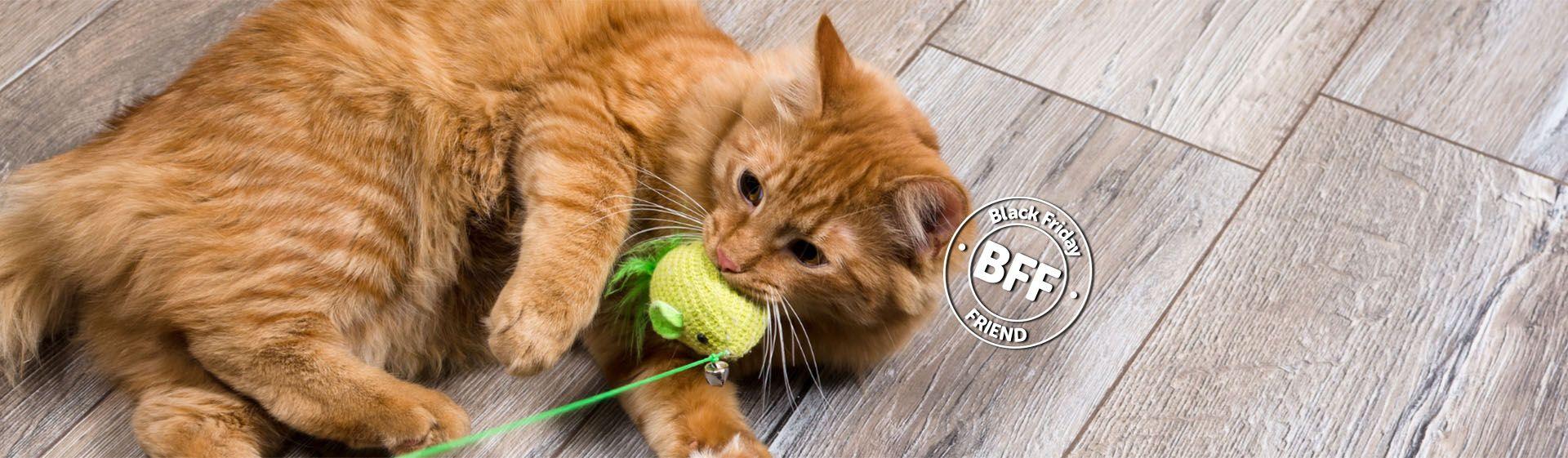Brinquedo para gato: qual é o melhor modelo?