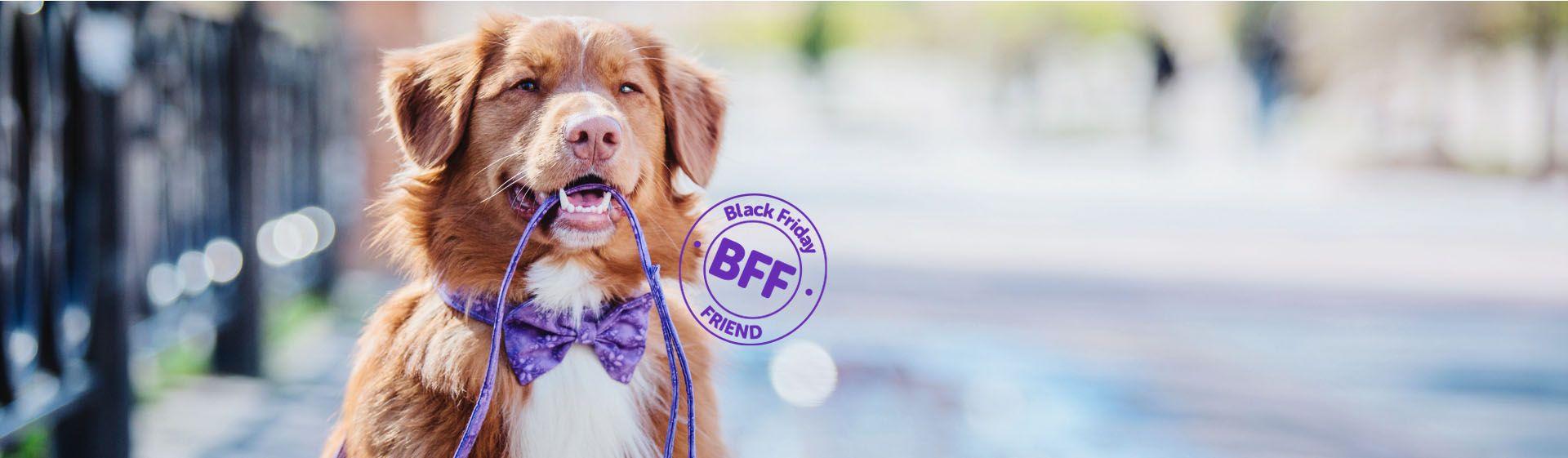 Coleira para cachorro: veja os principais modelos e entenda para que servem