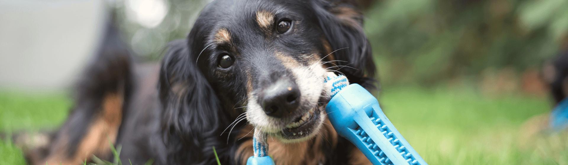 Brinquedo para cachorro morder: conheça as 10 melhores opções