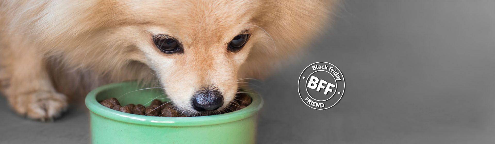 Ração para cachorro: confira as 9 melhores rações para cães