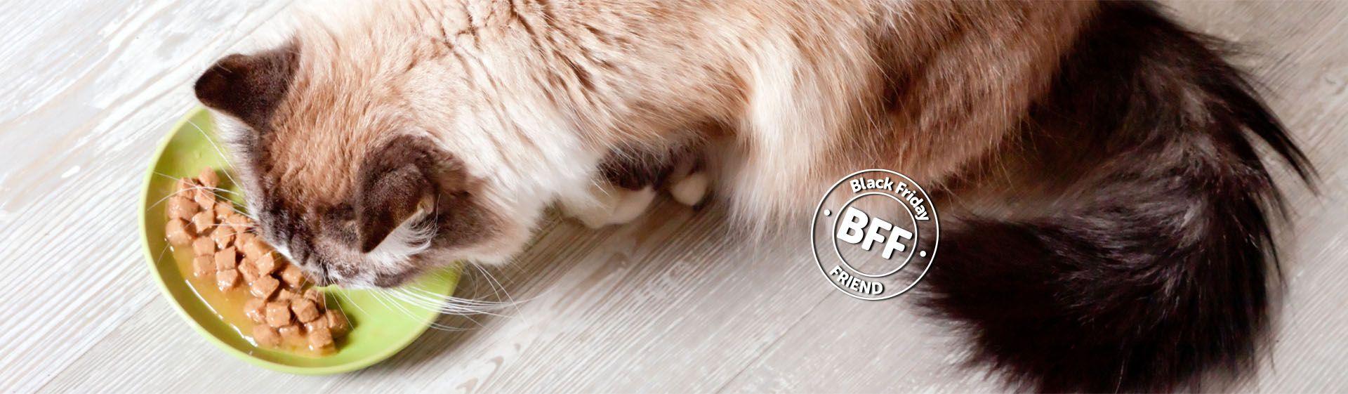 Sachê para gato: qual é a melhor ração úmida?