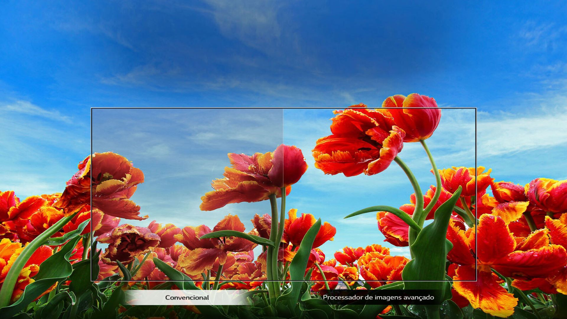 Comparativo de qualidade entre a reprodução HD e Full HD (Foto: Divulgação/ LG)