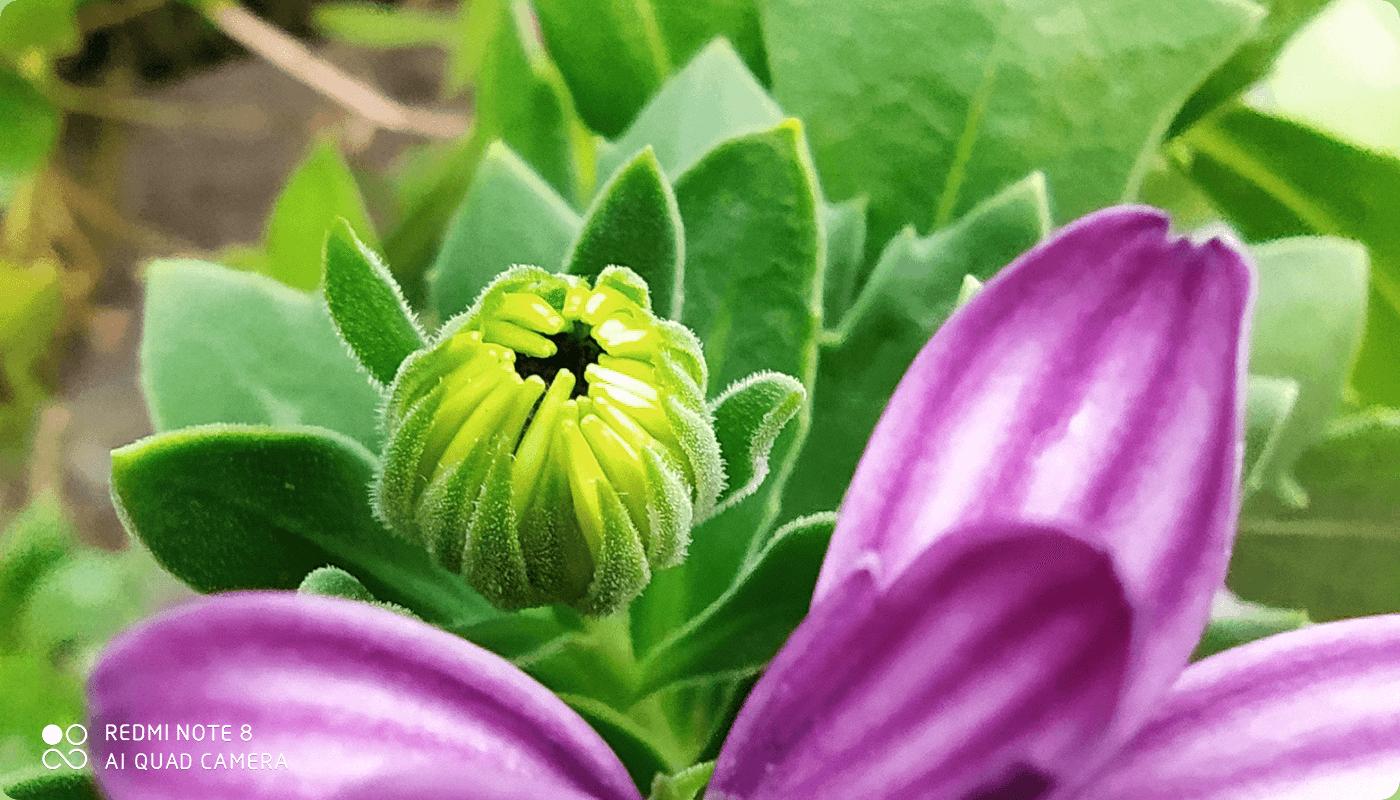 Com a lente macro, as fotos ficam riquíssimas em detalhes (Foto: Divulgação/Xiaomi)