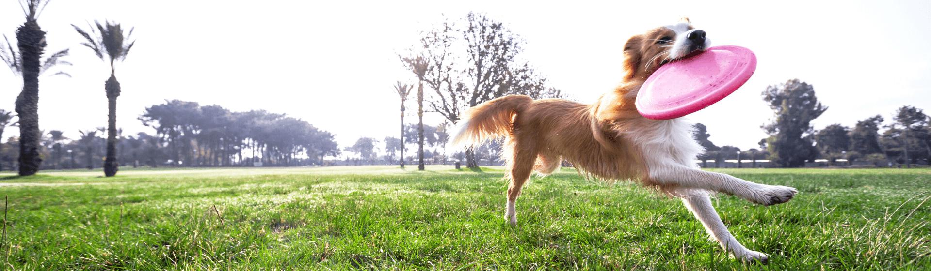 Brinquedo para cachorro hiperativo: confira as 10 melhores opções