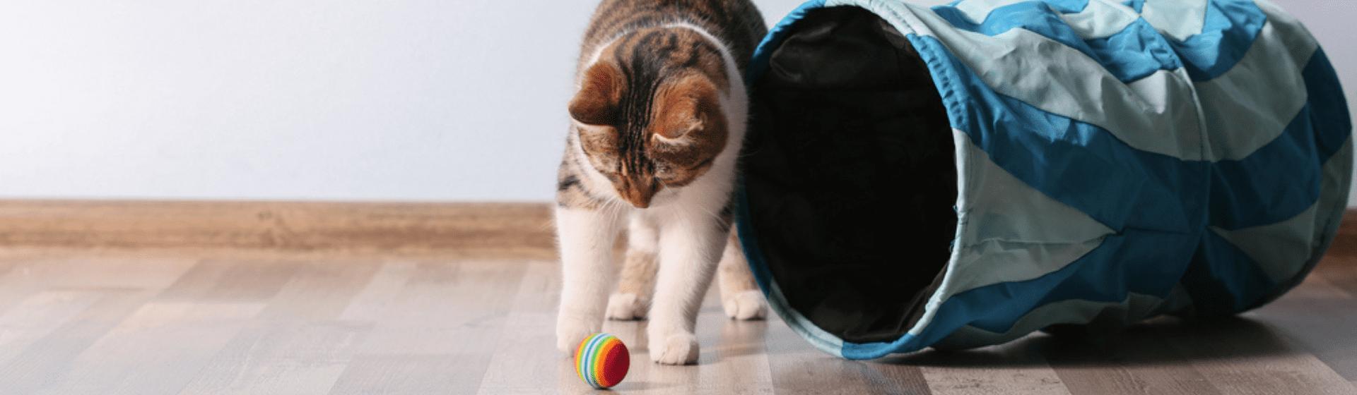 Brinquedo para gatinho: qual é o melhor para filhote?