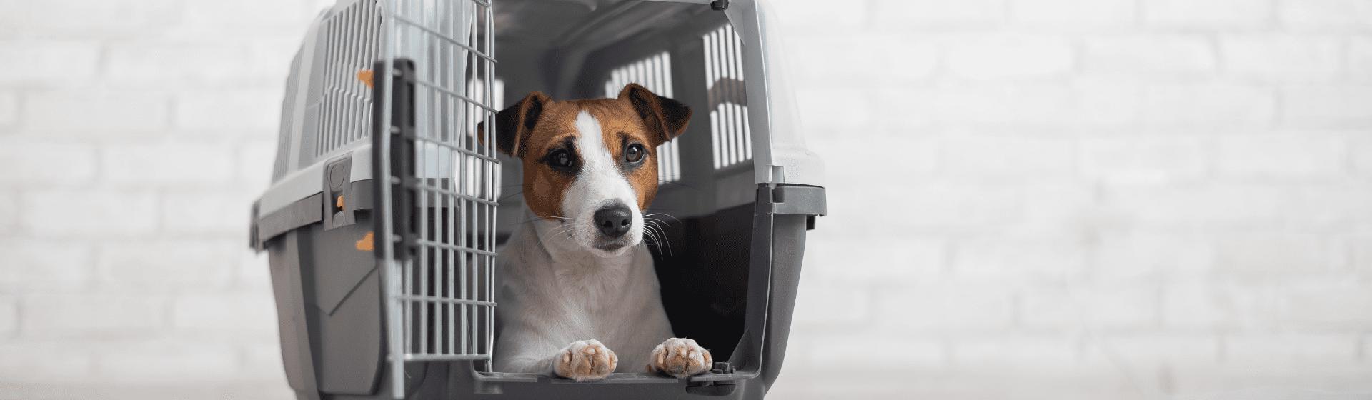 Caixa de transporte para cachorro:  como escolher a melhor para cães?