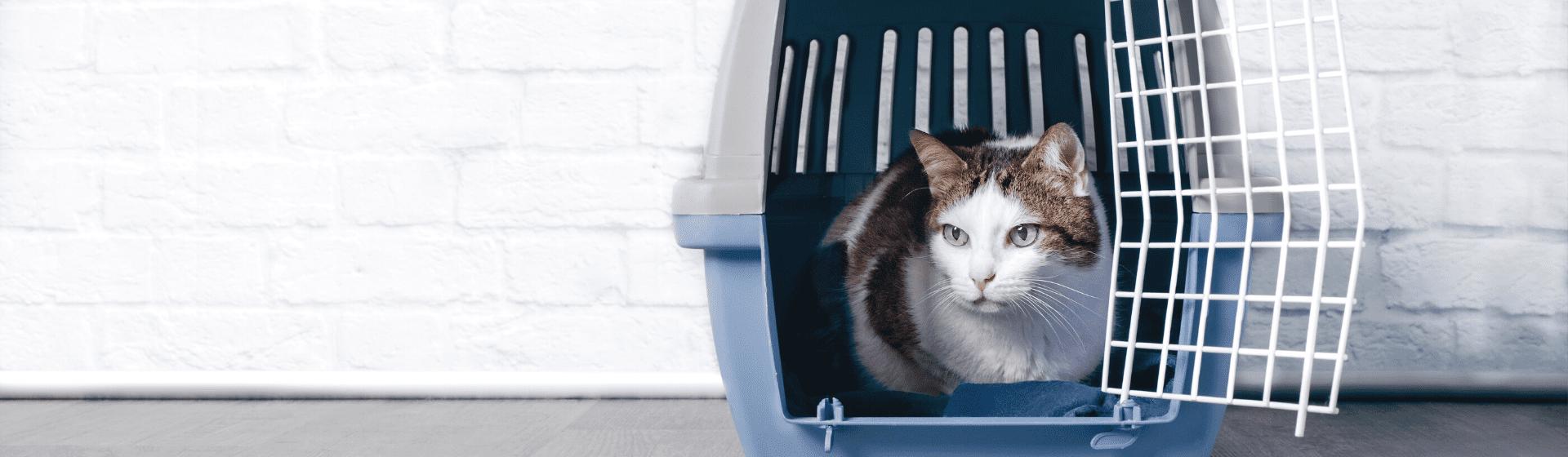 Caixa de transporte para gato: qual é o melhor modelo?