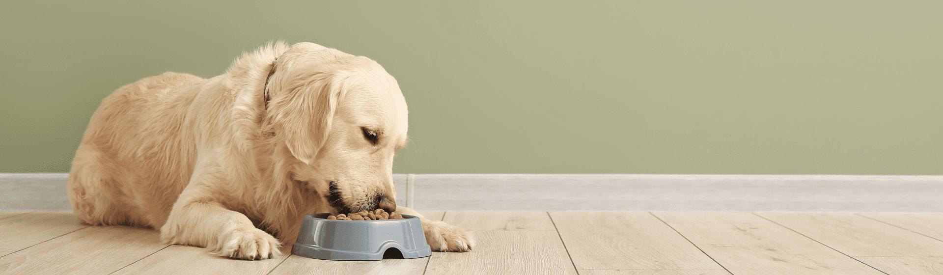 Comedouro para cachorro: qual é o melhor para cães?