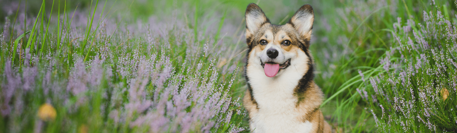 10 produtos para cachorro que todo dono deve ter