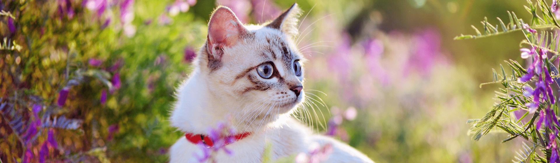 8 produtos para gato que todo dono deve ter