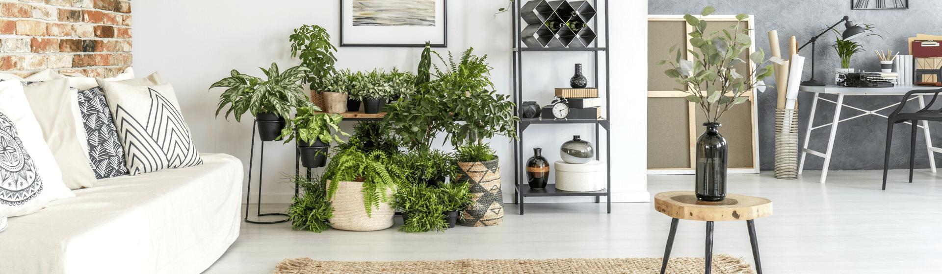 Plantas para casa: 10 espécies de plantas para cultivar dentro de casa