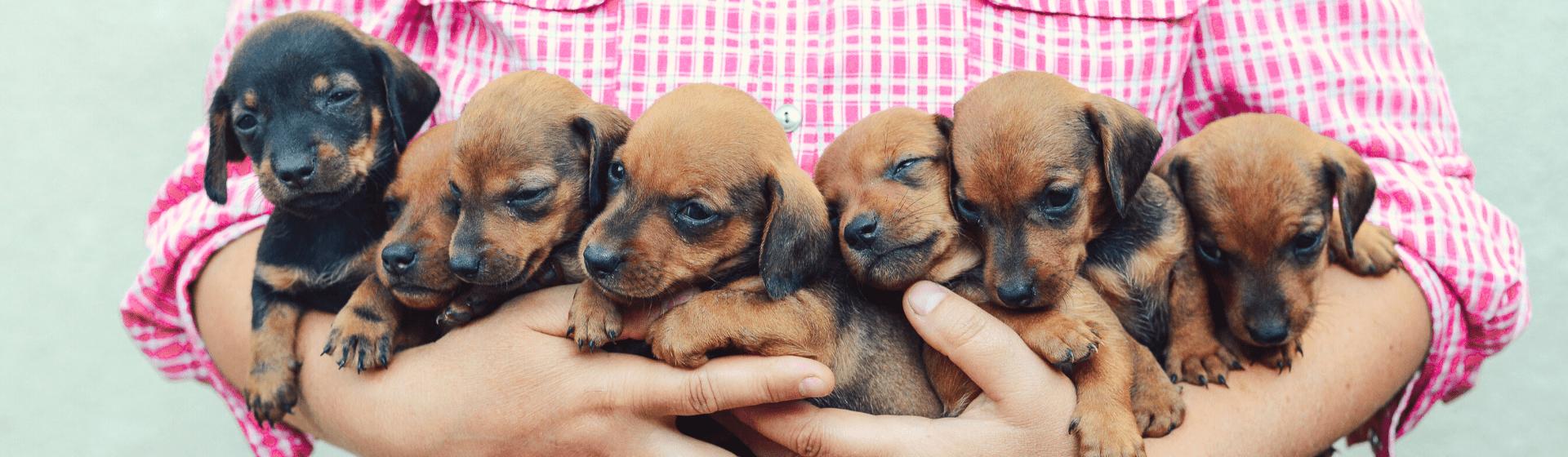 Enxoval para cachorro: o que é preciso para ter um cachorro?