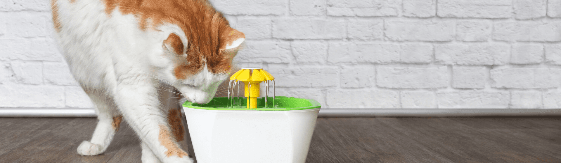 Bebedouro ou fonte para gatos: qual é o modelo ideal?