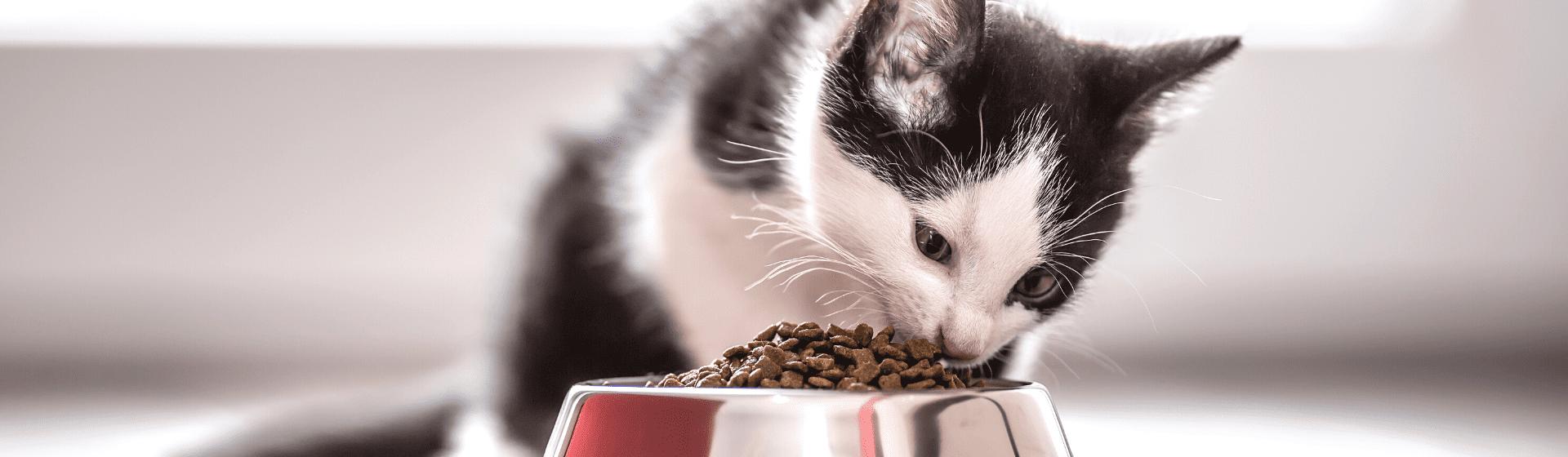 Ração para gato: veja as 10 melhores rações para gato