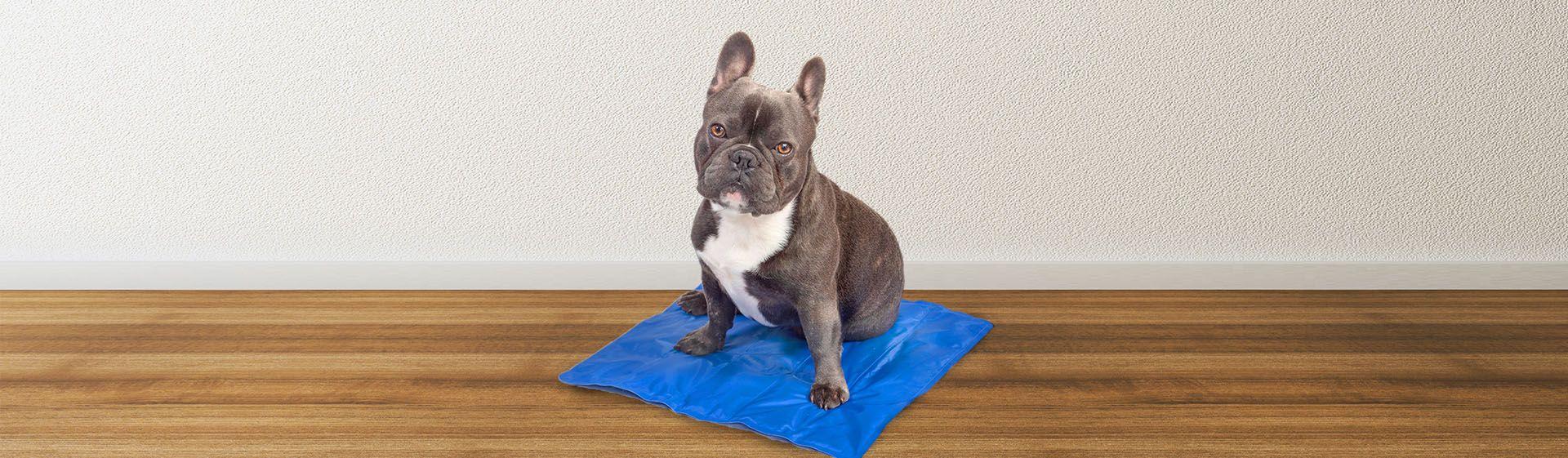 Tapete gelado para cachorro: como refrescar o pet?