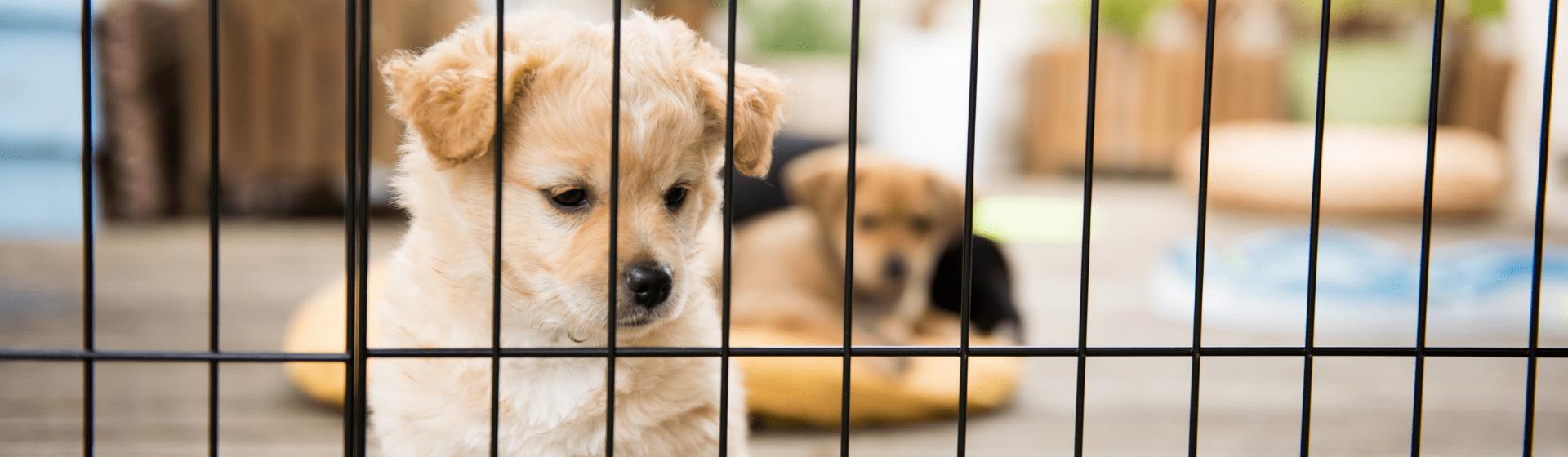 Cercado para cachorro: entenda para que serve e veja os principais modelos