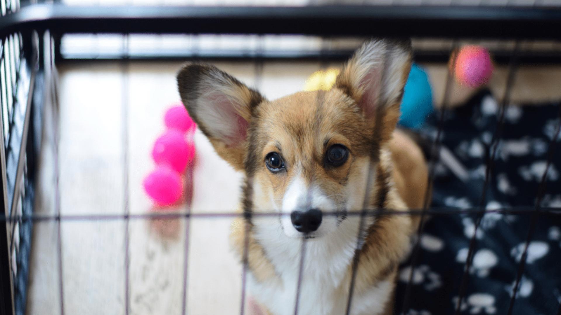 O cercado para cachorro deve conter itens familiares ao pet (Imagem: Reprodução/Shutterstock)