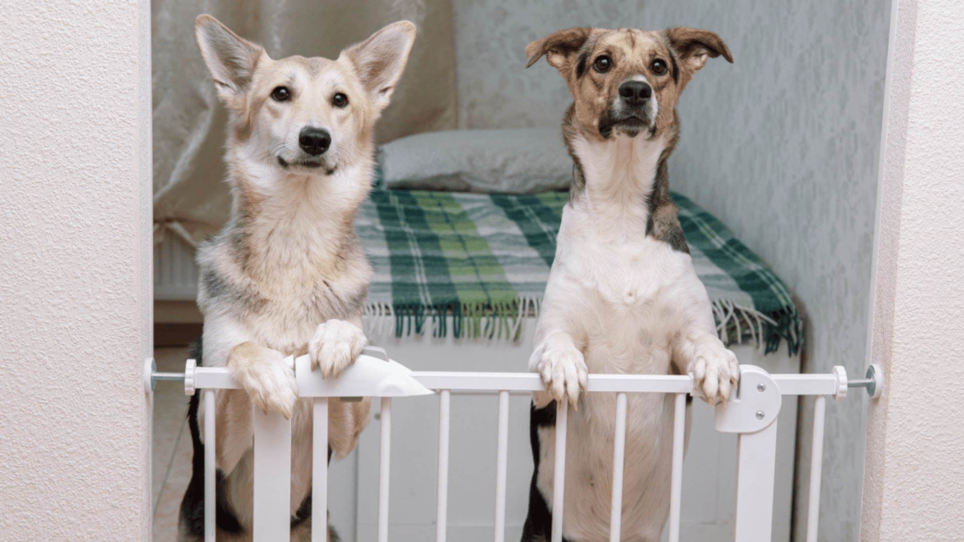 O cercado para cachorro grande costuma ser em formato de grade com portões (Imagem: Reprodução/Shutterstock)