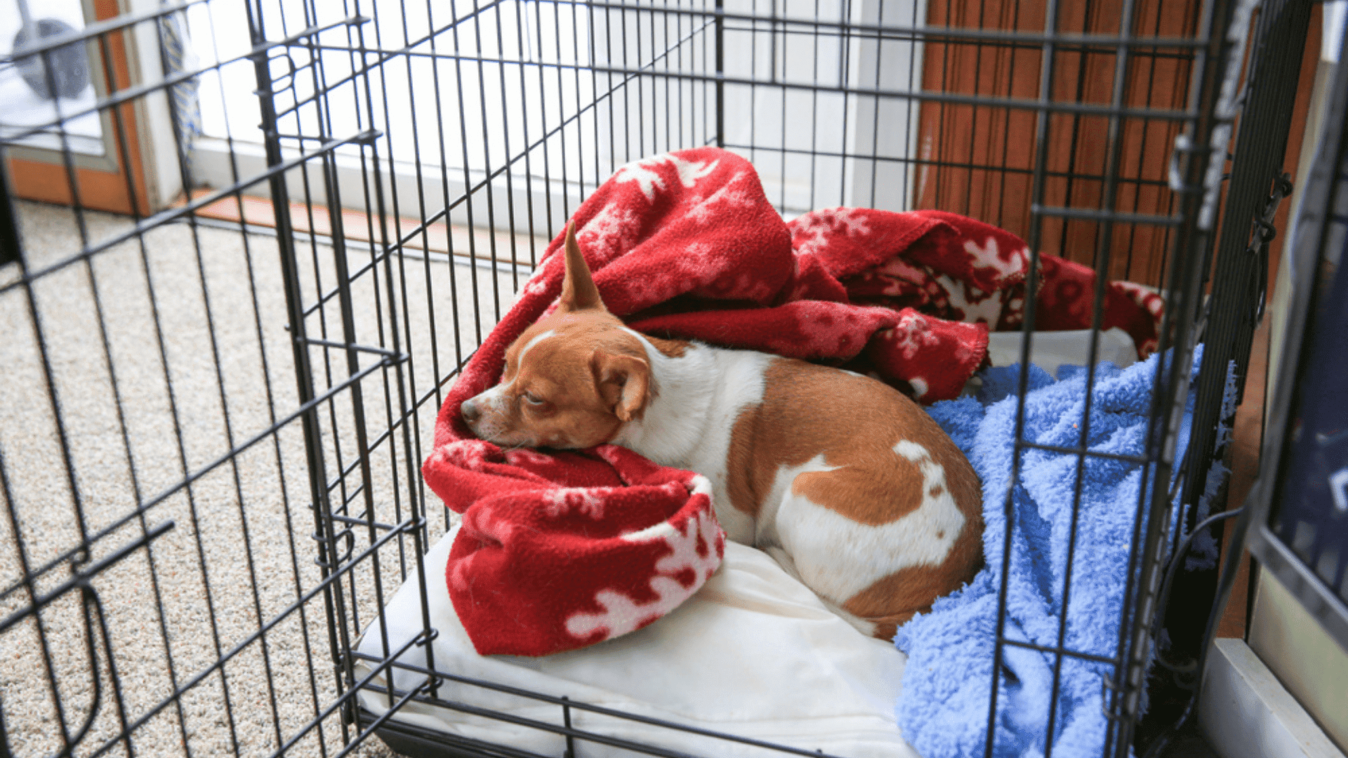 O cercado para cachorro pequeno apresenta formato de berçário (Imagem: Reprodução/Shutterstock)