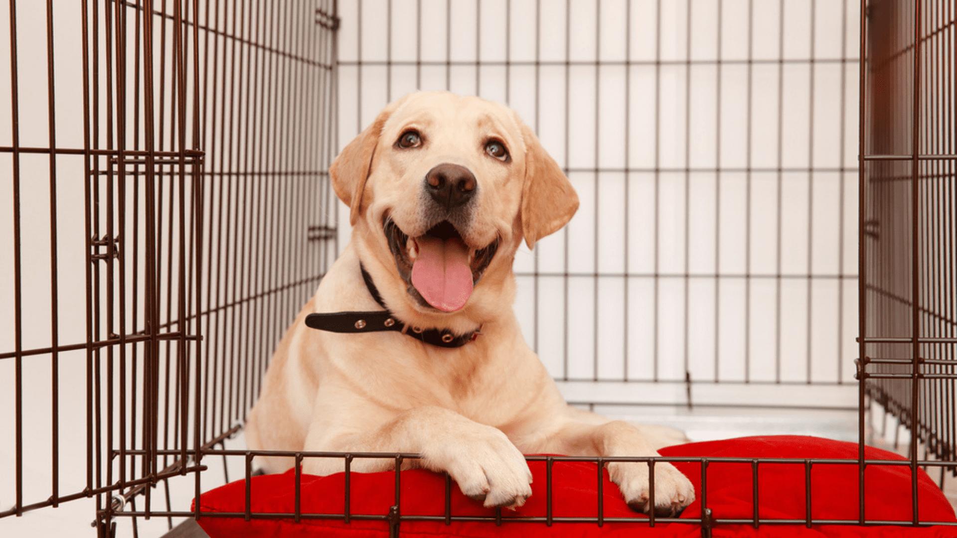 Veja para que serve e qual o melhor cercado para cachorro! (Imagem: Reprodução/Shutterstock)