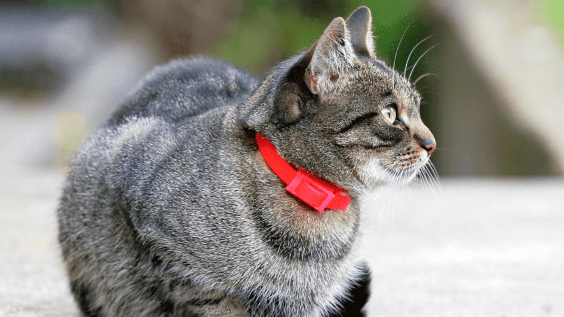 Coleira antipulgas para gato (Imagem: Reprodução/Shutterstock)