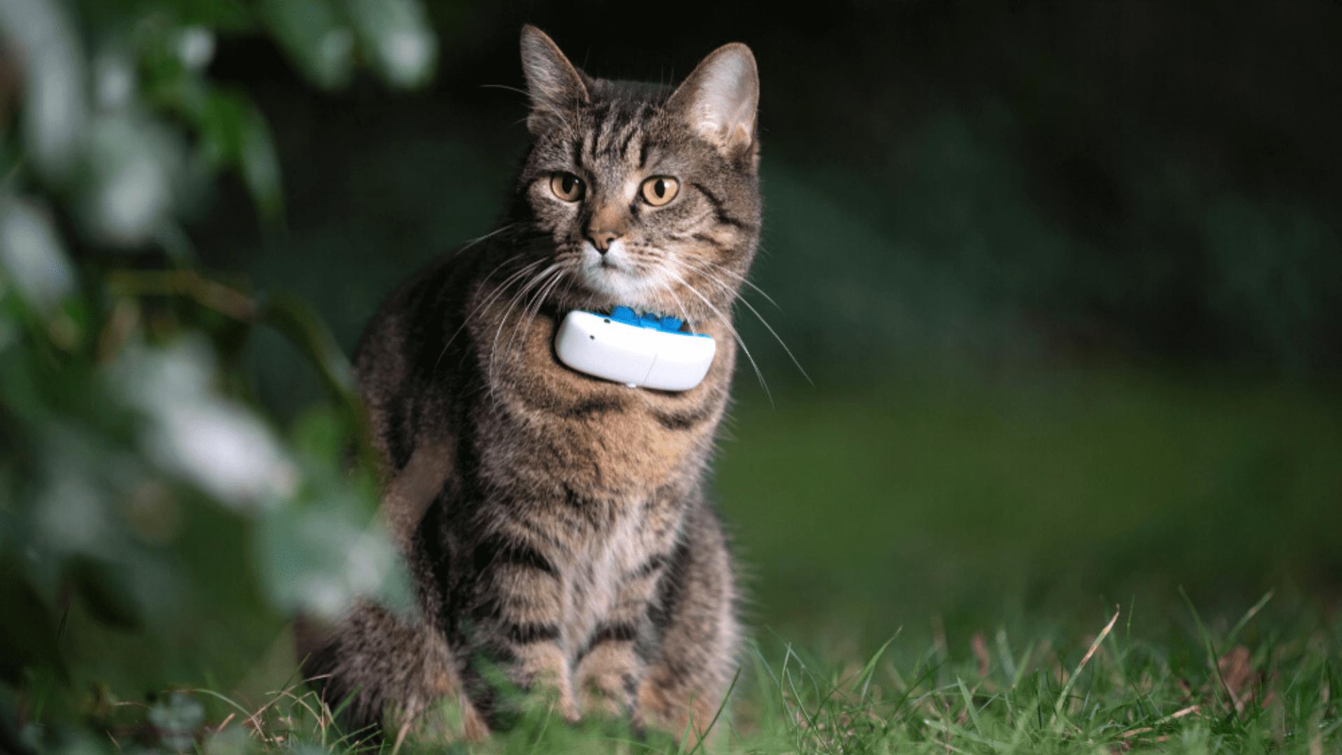 Coleira para gato com GPS (Imagem: Reprodução/Shutterstock)
