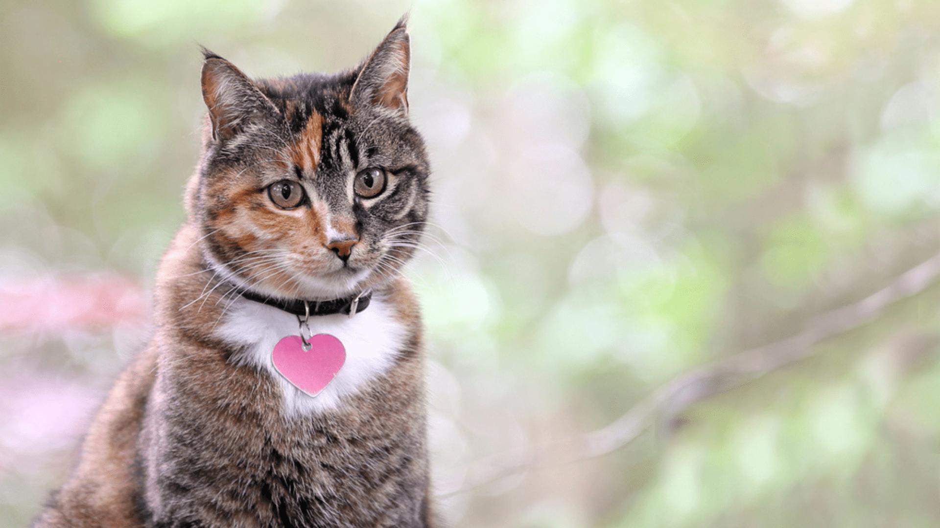 Coleira para gato com identificação (Imagem: Reprodução/Shutterstock)