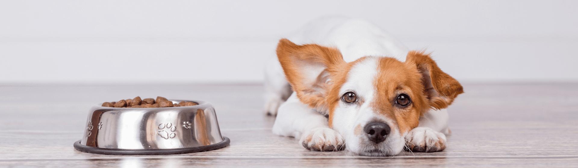 Ração para cachorro castrado: 5 opções para o seu cão