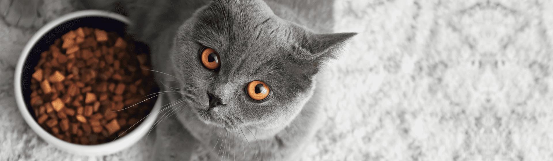 Ração para gato castrado: 5 opções para o seu pet