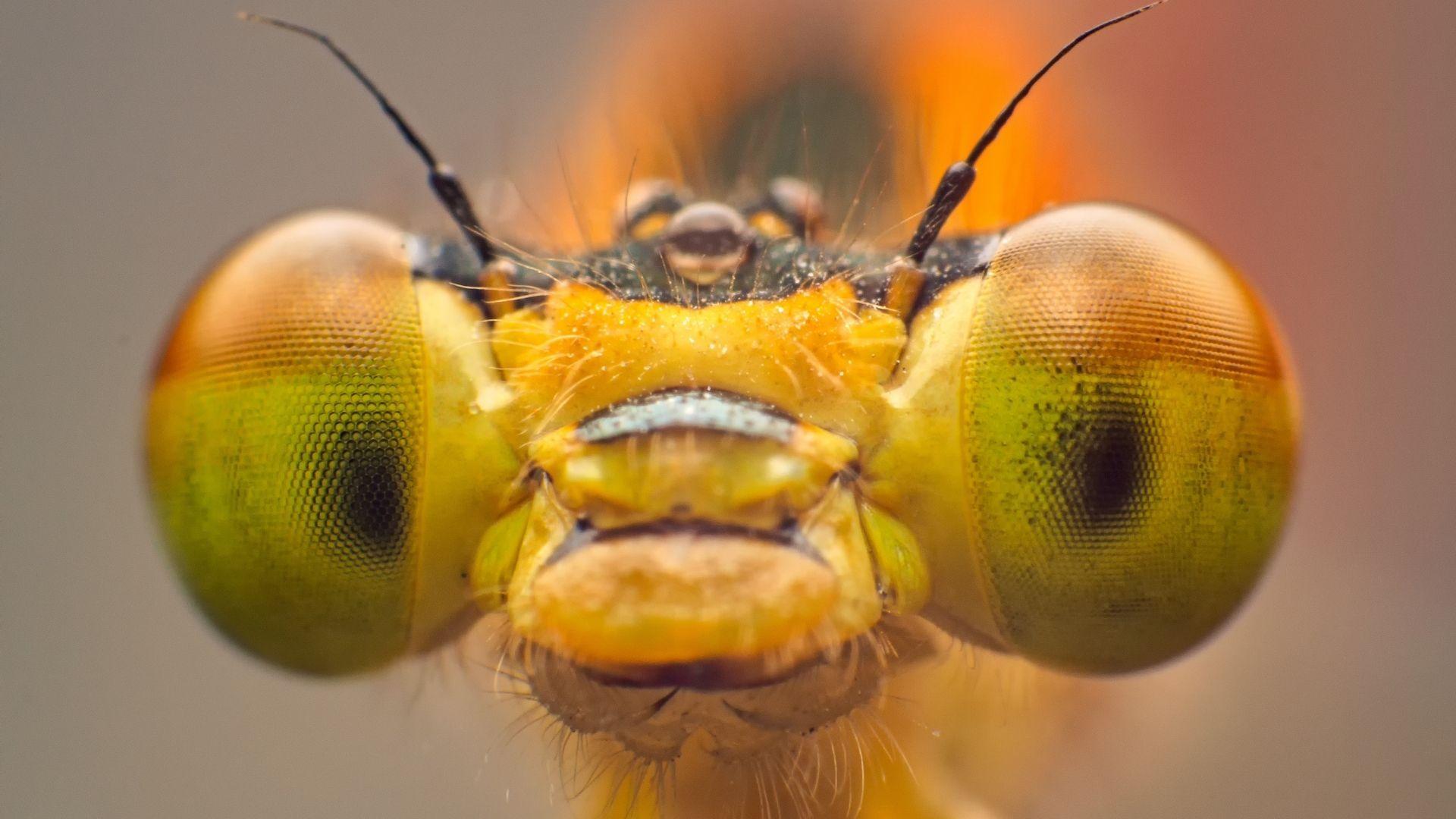 Exemplo de uma foto tirada com uma lente macro (Foto: Shutterstock)