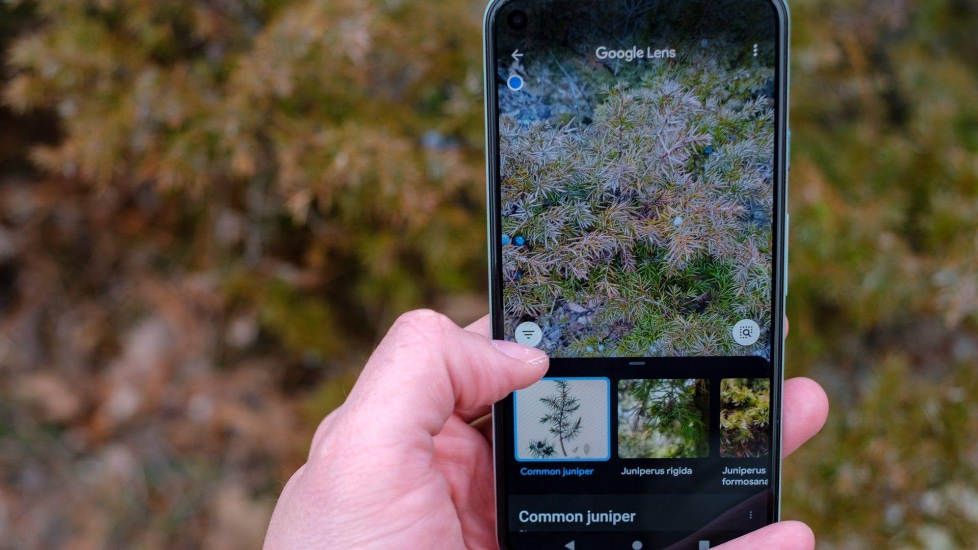 Google Lens permite identificar espécies de plantas e animais (Foto: Shutterstock)