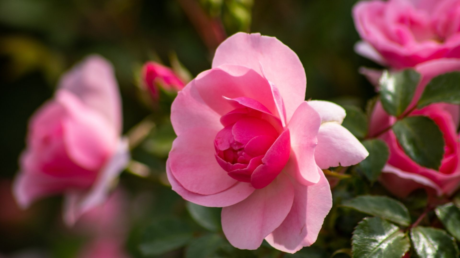 Câmeras de celular: registro de flor com uma lente macro (Foto: Shutterstock)
