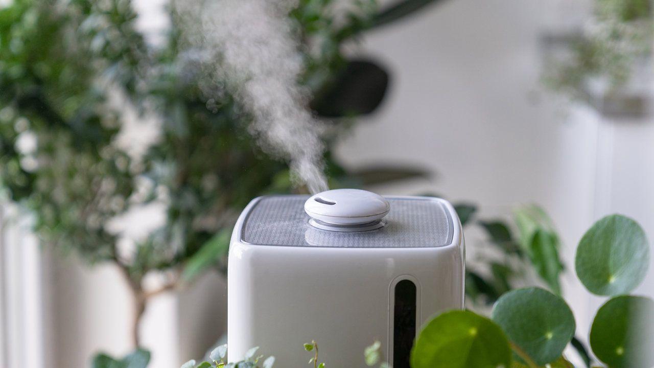 Umidificador de ar ultrassônico branco funcionando em meio à plantas