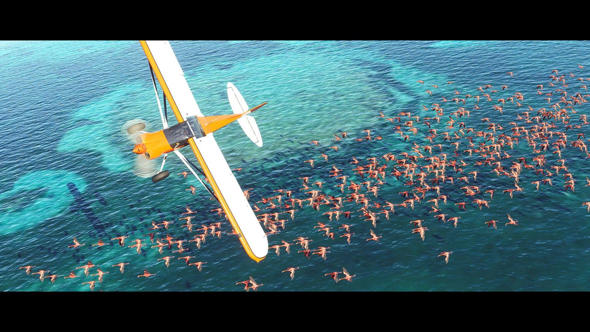 Imagem do jogo Microsoft Flight Simulator mostra uma imagem externa em que o jogador sobrevoa o oceano com uma revoada de flamingos abaixo